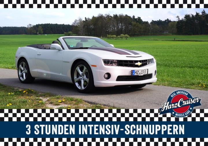 Camaro Intensiv-Schnuppern - 3 Stunden